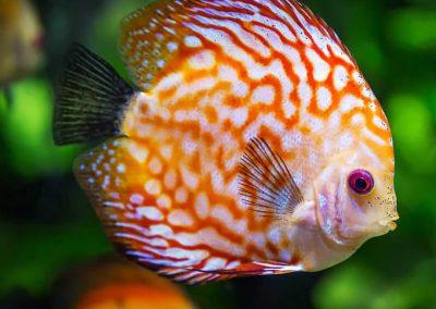 quanto-vive-pesce-acquario